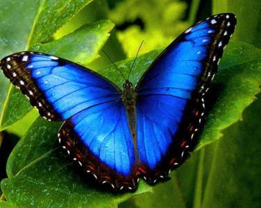 butterflyphoto